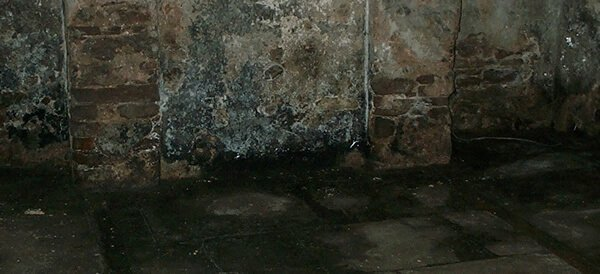 Why is Your Cellar Damp?