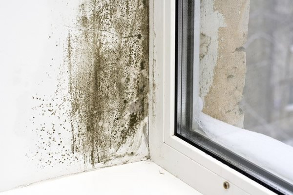Free Online Damp Quotation In London